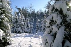 winter-656