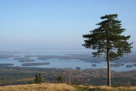 Ausblick auf die Natur Schwedens
