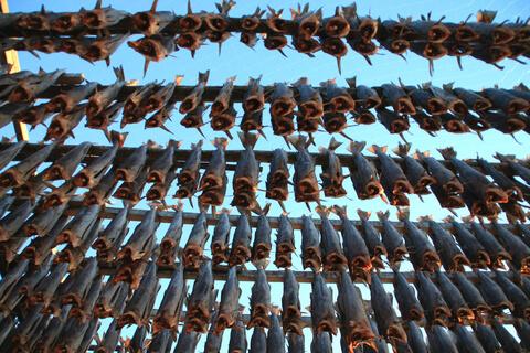 Dorsch angeln Lofoten
