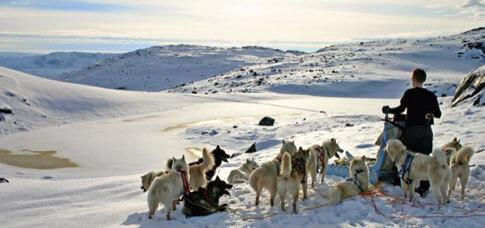 Hundeschlittensafari auf Grönland