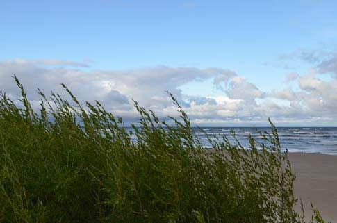 Ein stürmischer Morgen an der Ostsee