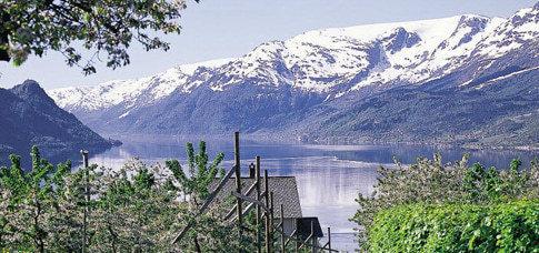 Obstblüte am Hardangerfjord, immer im Mai und Juni!