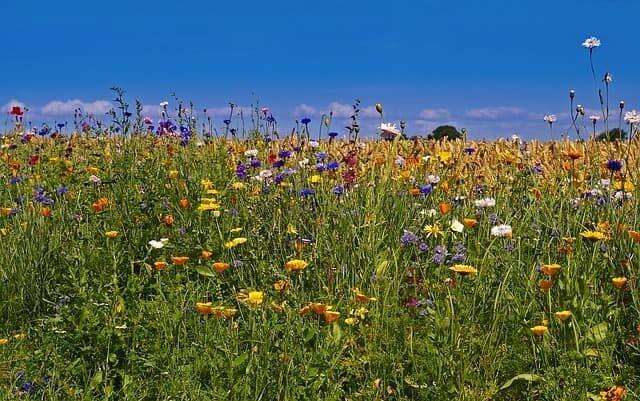 Schöne Blumenlandschaft auf Fünen