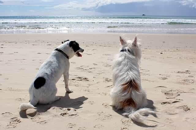 Urlaub mit Hunde auf Lolland