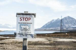 Eisbaeren Spitzbergen